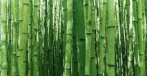 Bamboo http://hd4desktop.online/10271-bamboo-tree-nature-HD-Wallpaper