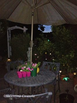 My garden at night