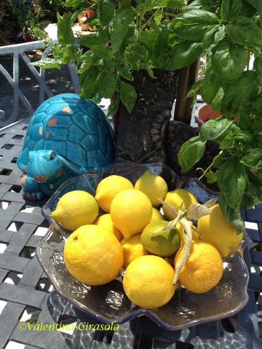 Lemon Display
