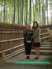 Bamboo Forest - Kyoto