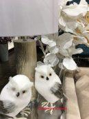 whitebirds
