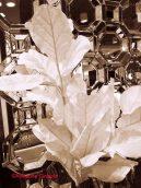 whitetreemirror_a