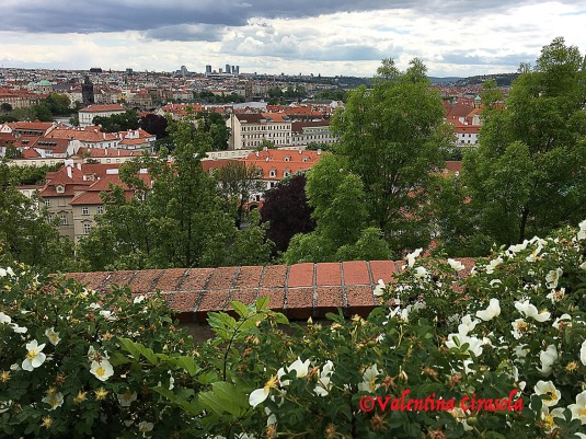 Prague - Red Roofs
