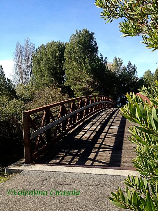 Shoreline_Bridge