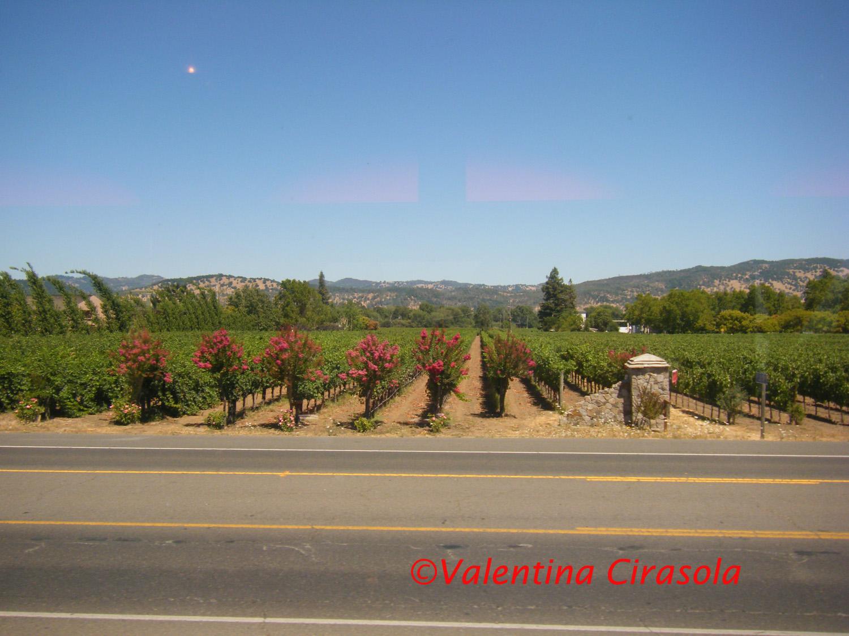 Napa View